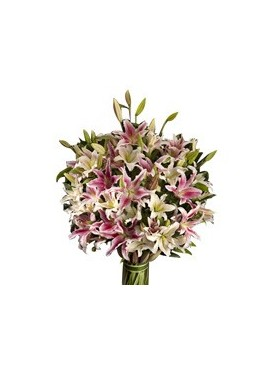 20 white and pink oriental lilies